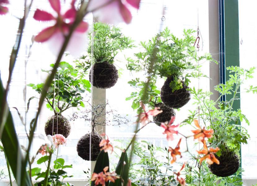 Jardín Japonés: Kokedama, Diseño y Vegetación Oriental