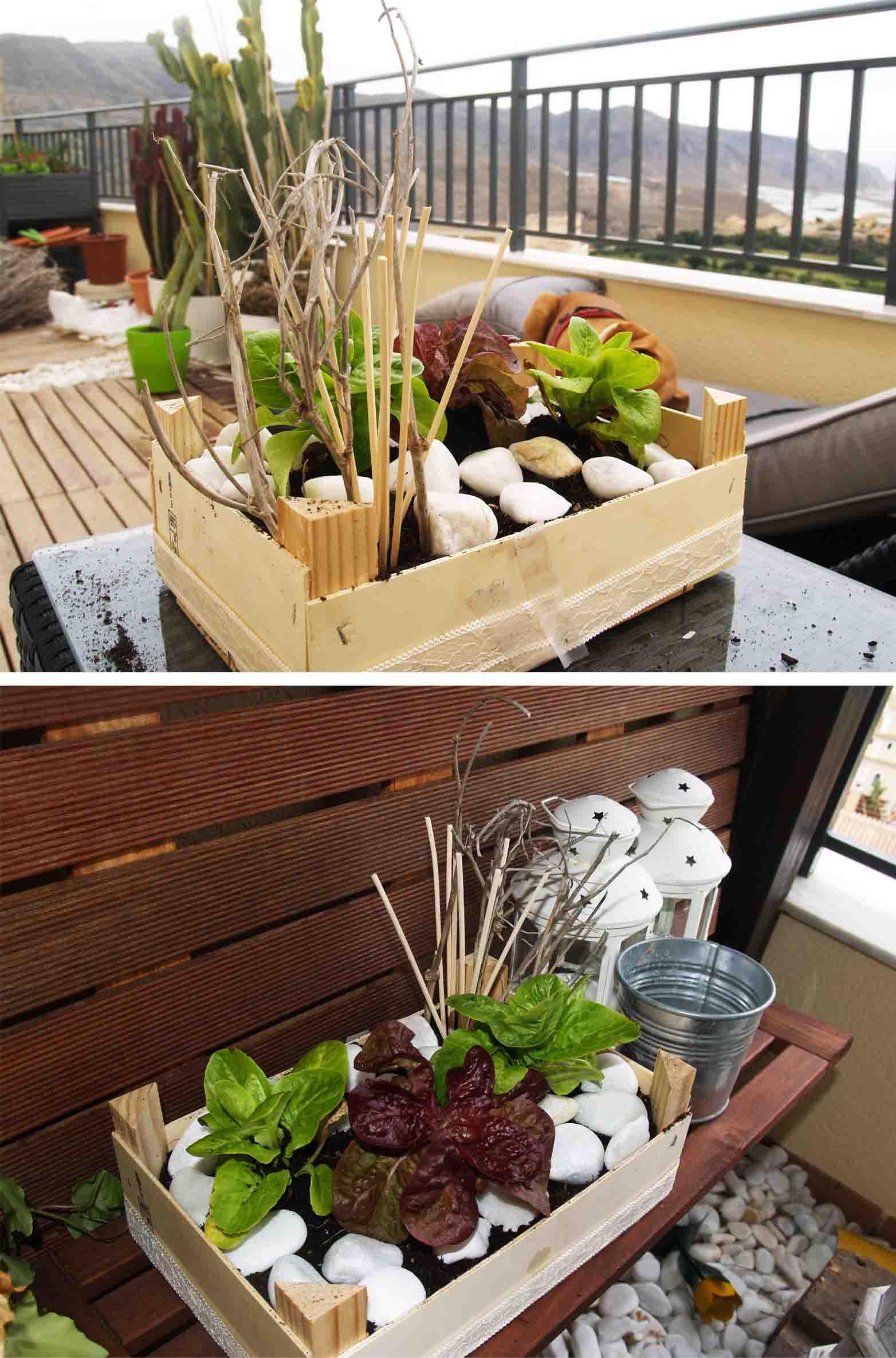 Espacio verde: De Caja de Fresas a Mini Huerto