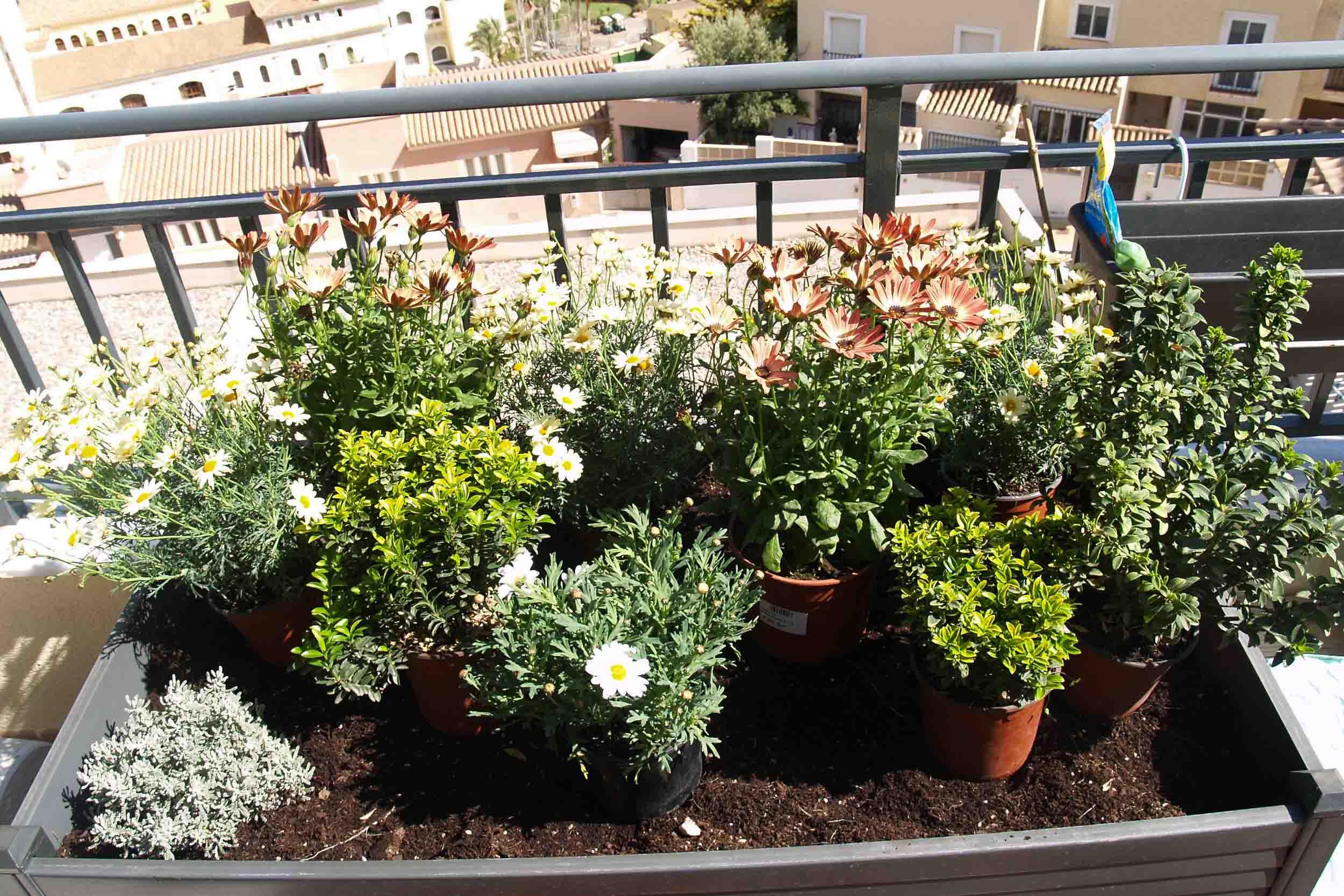 distribución plantas