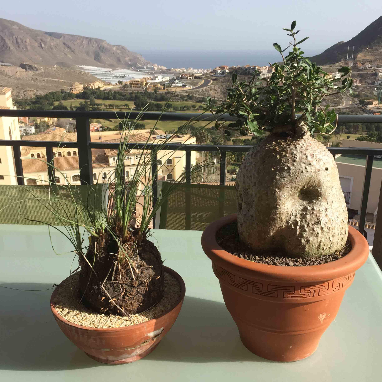 Cactus Almería