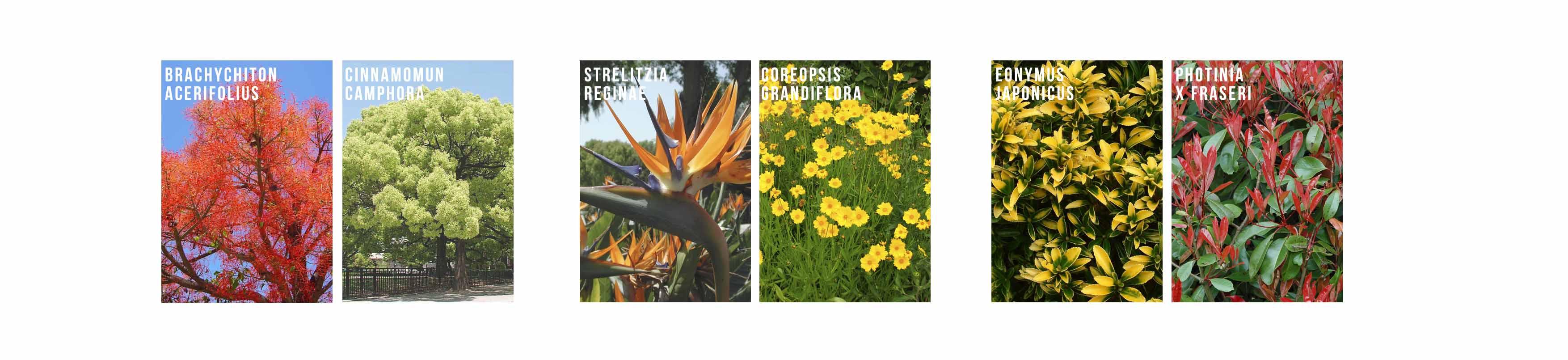 especies vegetales jardin mediterraneo