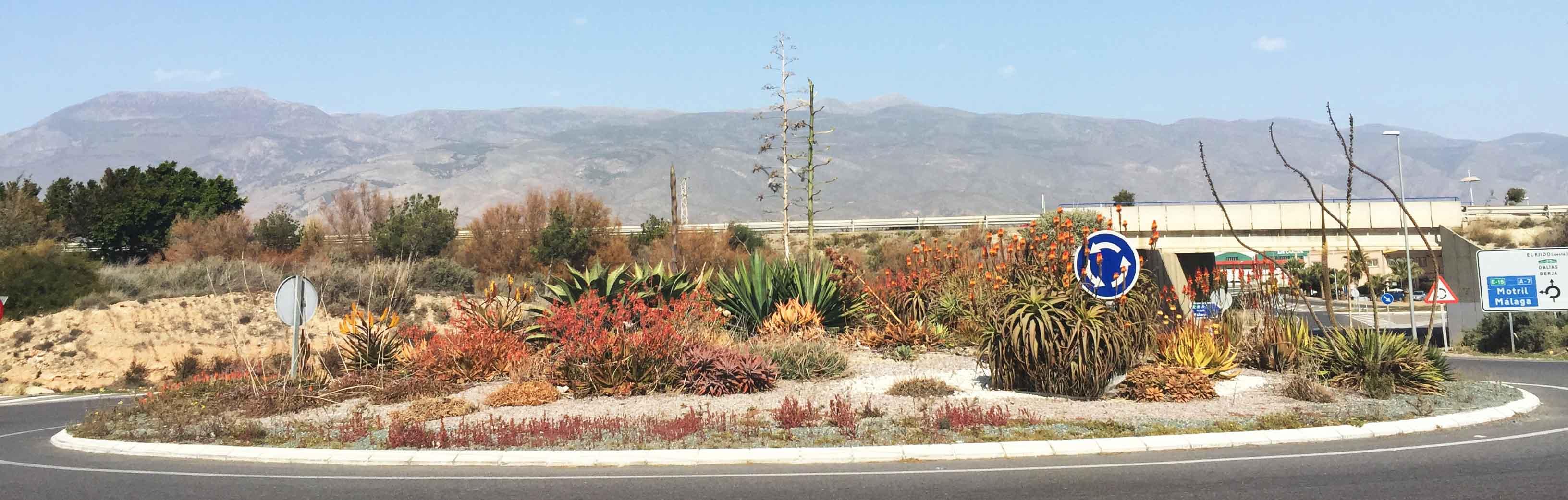 Rotonda Cactus