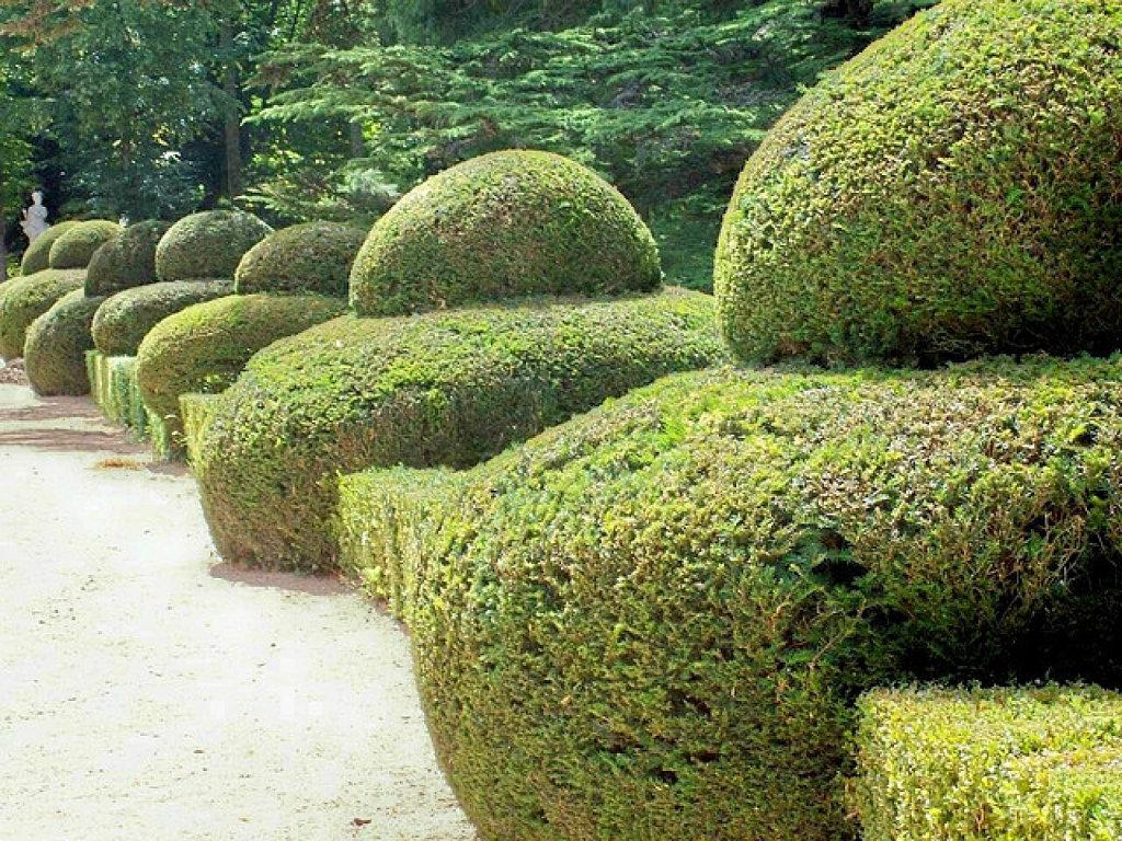 Boj -Diseño Topiario para un jardín de forma