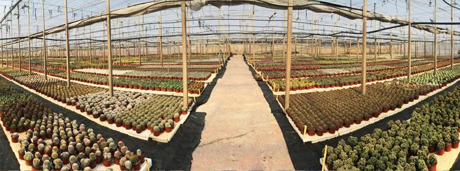 Paisajismo con Plantas Crasas y Cactus en Almería