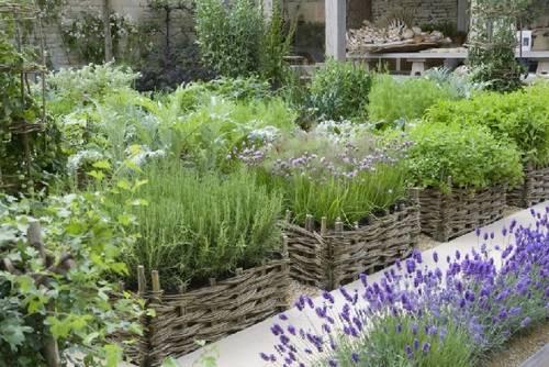 Romero, sencillez en el diseño de jardines