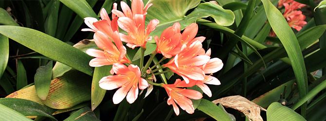 Clivia, molduras de colores