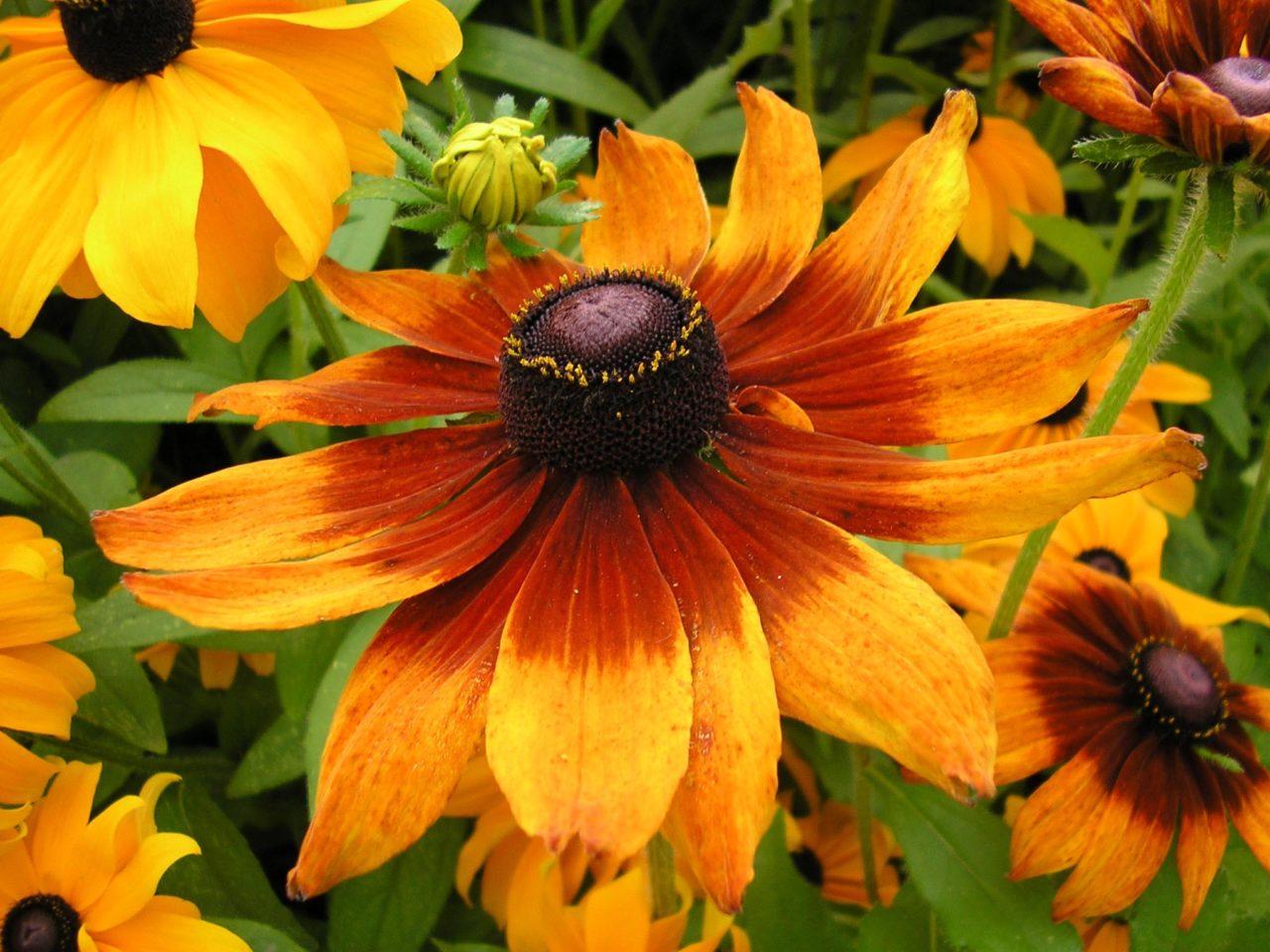 diseño de jardines florales