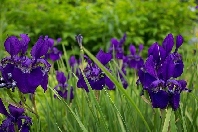 Color en el Jardín