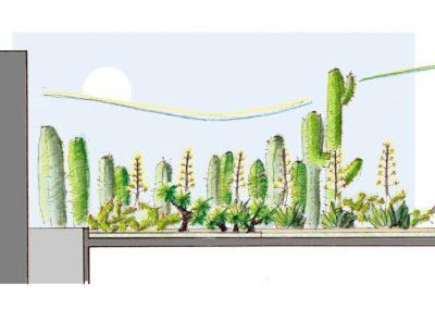 Dibujo a Mano Jardines xerófitos