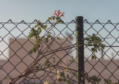 Diseño de Jardines y Terrazas Cerramiento