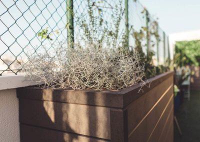 Diseño de Jardines y Terrazas Detalle plantas