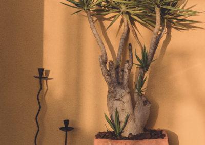 Diseño de Jardines y Terrazas Macetero