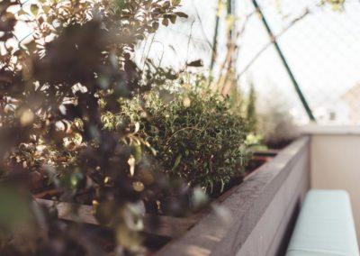 Diseño de Jardines y Terrazas Vegetación