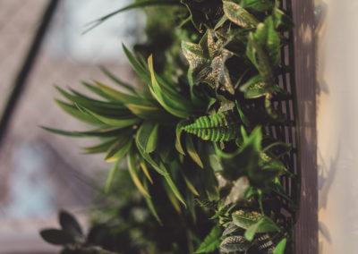 Diseño de Jardines y Terrazas plantas