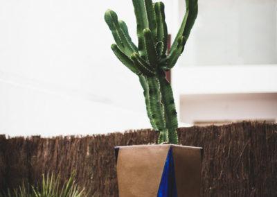 diseño de paisajismo y jardines en Almería cactus