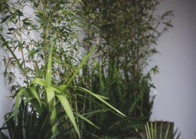 diseño de paisajismo y jardines en Almería vegetación