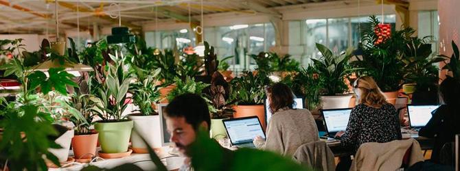 Beneficios de tener un jardín en la oficina