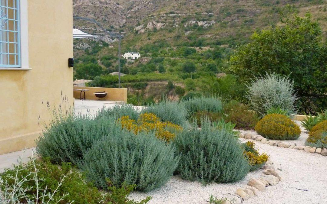 Los 5 puntos fundamentales para elegir bien las plantas de tu jardín mediterráneo